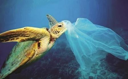 Chất thải nhựa ra đại dương làm ô nhiễm môi trường